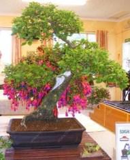 Brilliant Bonsai Plant Design Ideas For Garden15
