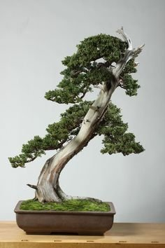 Brilliant Bonsai Plant Design Ideas For Garden17
