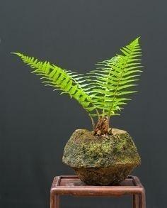 Brilliant Bonsai Plant Design Ideas For Garden18