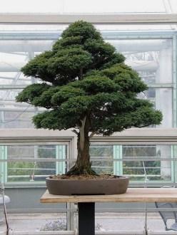 Brilliant Bonsai Plant Design Ideas For Garden31