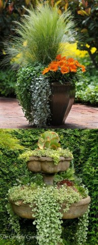 Brilliant Bonsai Plant Design Ideas For Garden39