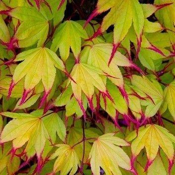 Minimalist Japanese Garden Ideas41
