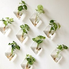 Simple Wall Plants Decorating Ideas42
