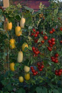 Brilliant Vertical Gardening Ideas02