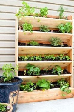 Brilliant Vertical Gardening Ideas35