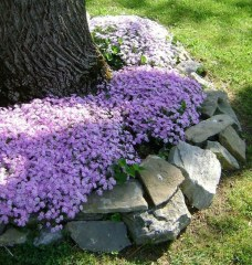 Cute Front Yard Landscape Ideas For 201926
