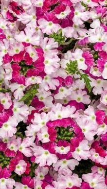 Extraordinary Summer Garden Ideas Just For You 15