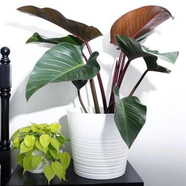 Superb Indoor Garden Designs Ideas For Home27