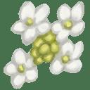 Japanese Snowball Flower