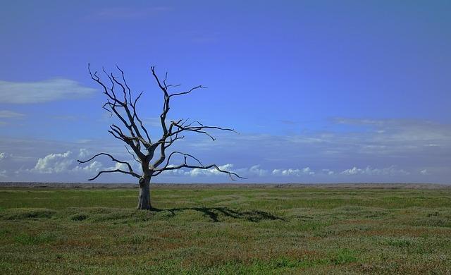 Árbol seco por contaminación del suelo