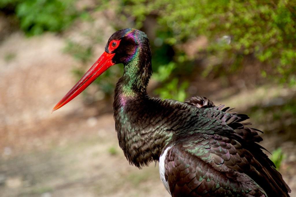 Animales en peligro de extinción en España