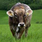 Konferencja branży mięsnej – 7 czerwca
