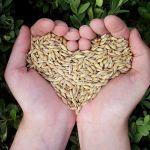 """Konferencja """"Jakość zbóż i przetworów zbożowych"""""""