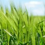 Misja przedsiębiorców sektora rolno-spożywczego <br> krajów UE