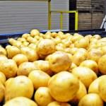 Zmiany węgierskich przepisów dot. przesyłek bulw ziemniaków z Polski