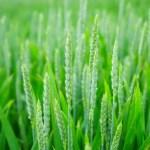 ARiMR w terminie wypłaciła pieniądze rolnikom