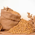 Pasze GMO do 2024 roku